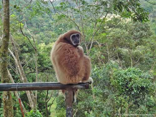 обезьяна провела 18 лет в одиночестве теперь она не отпускает руку своего нового друга ни на миг